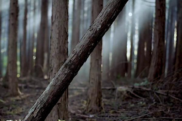 素敵な森の朝