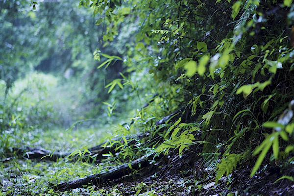 理想の山林