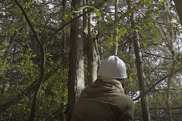 シルキーはやうち4段で木を切る