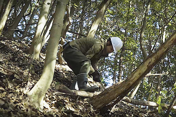 斜面で木を切る