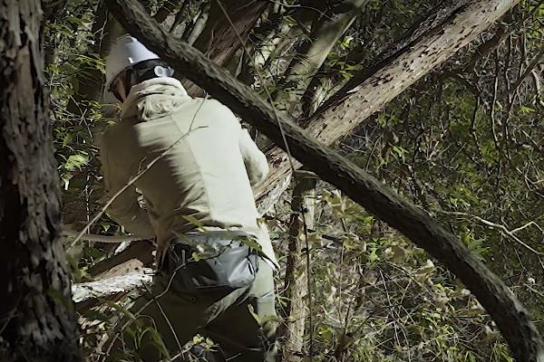 斜面の木を切る