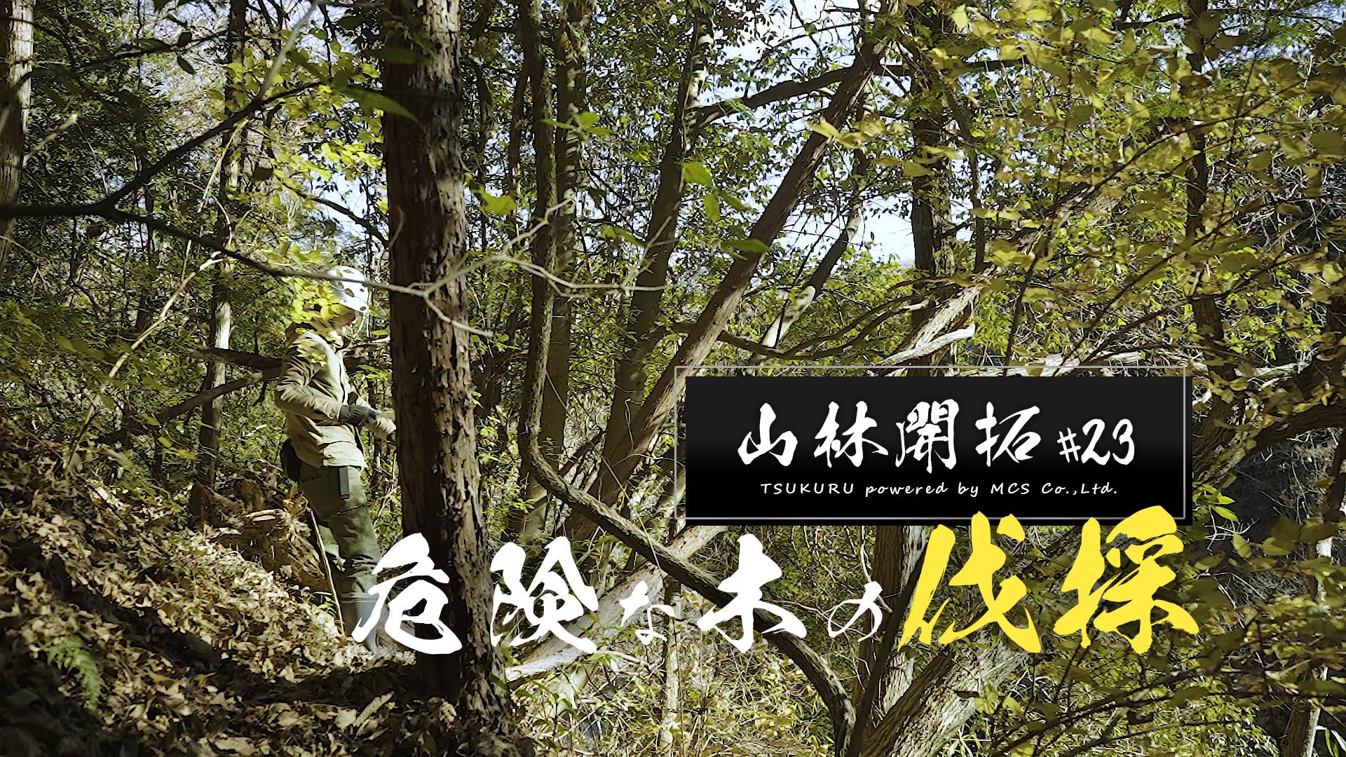 危険な木の伐採