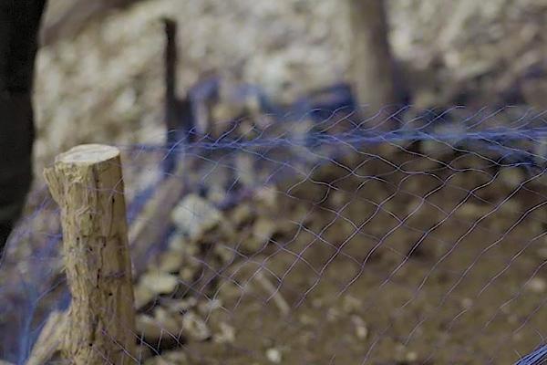 畑の鳥害対策